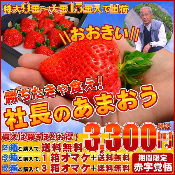 社長のあまおう,苺,いちご,イチゴ,あまおう,甘王,イチゴ